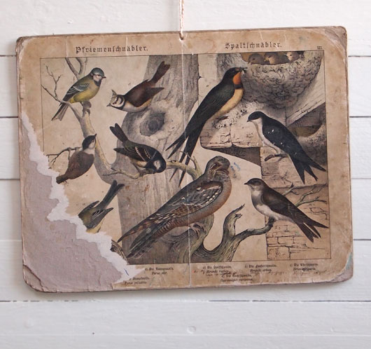 19th-century antique ornithology wall card: Village Swallow