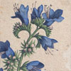 19th-century botanical art wall card: X